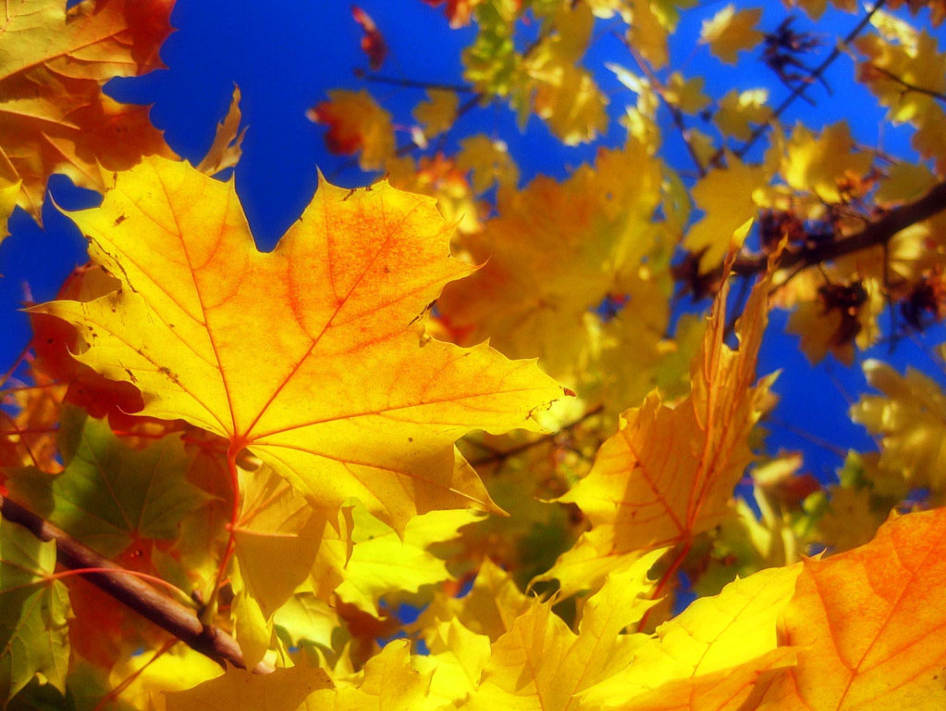 Золотая осень кафе г стерлитамак фото 6